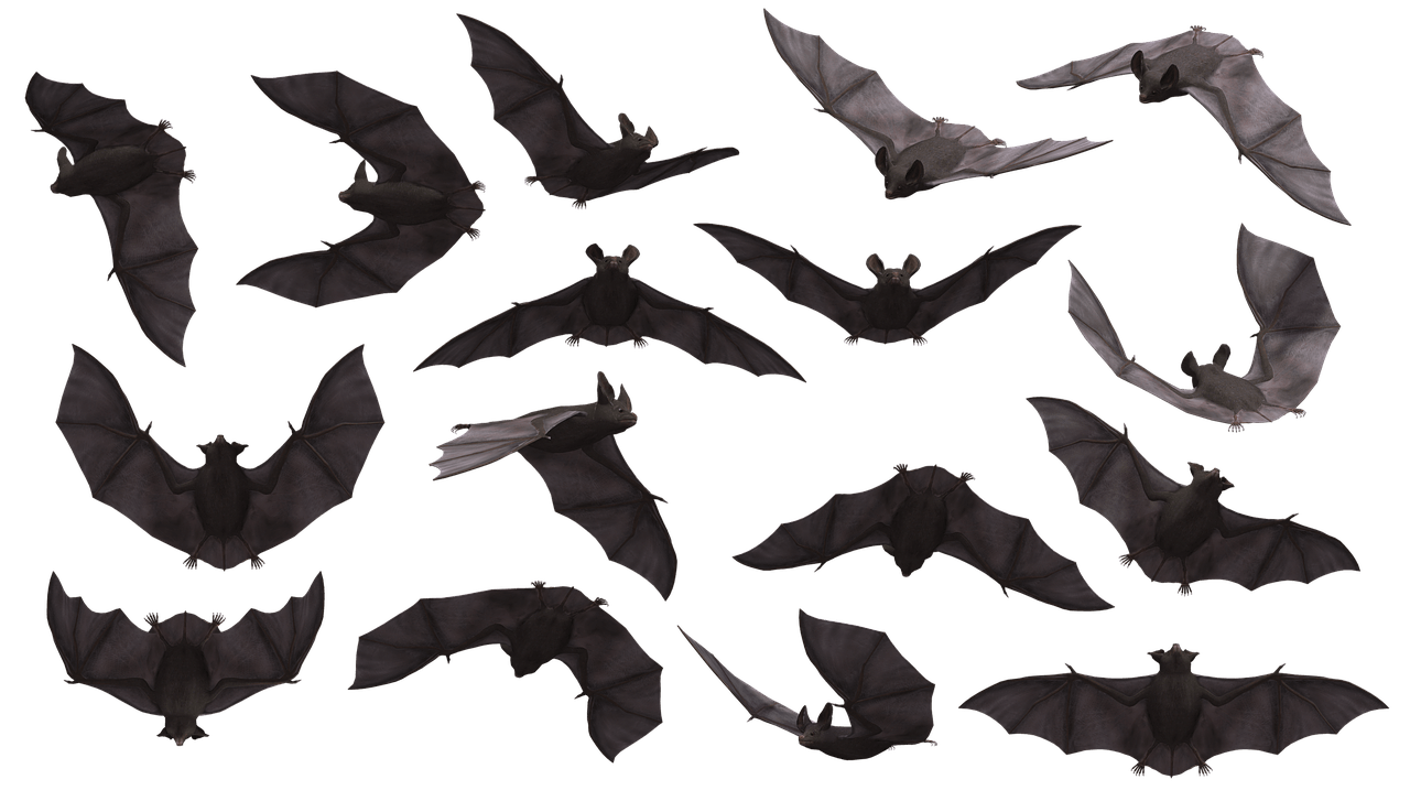 Tjinimin was associated with bats