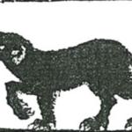 Shug Monkey - Image from cryptidz.fandom.com