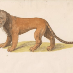 What is a Manticore - Persian Mythology