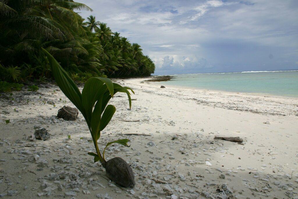 Leutogi longed to return to Samoa