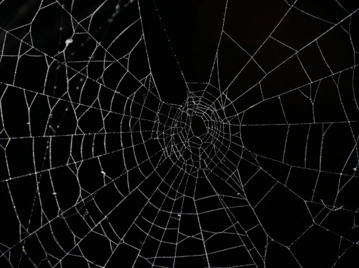 Jorogumo entangles its victims with intricate webs