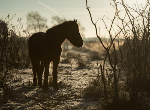 The Taraxippus was believed to haunt horses